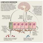 Las bacterias nos pueden ayudar en la depresión